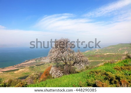 Beautiful nature landscape with blossom tree on the green hills. View on Galilee Sea ( Kinneret, Tiberias lake) - largest fresh water natural reservoir in Israel and agricultural valley. Israel - stock photo