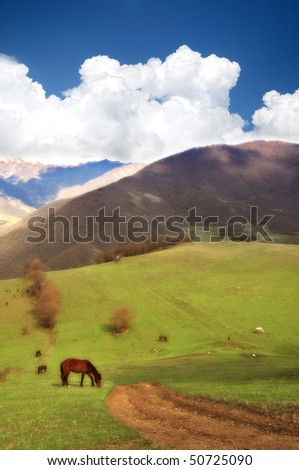 beautiful nature scene, horse grazing in a meadow