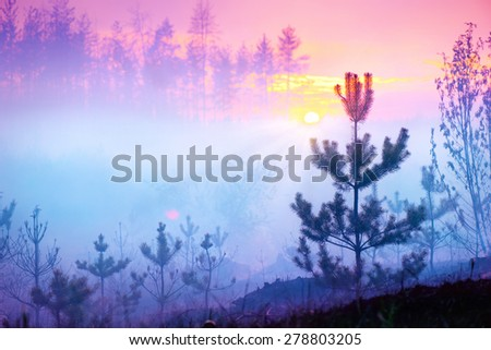 Beautiful Nature Sunrise Foggy Landscape. Misty Forest. Spring Nature. Park with Trees. Tranquil Background - stock photo