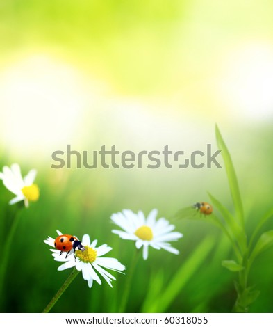 Beautiful nature theme - stock photo