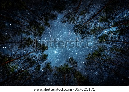 Beautiful night sky, the Milky Way and the trees. Elements of this image furnished by NASA. - stock photo