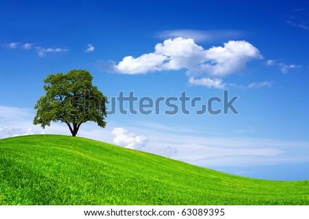 Beautiful oak tree on green field - stock photo