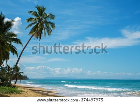 Beautiful ocean coast with tropic palms on sunny day - stock photo