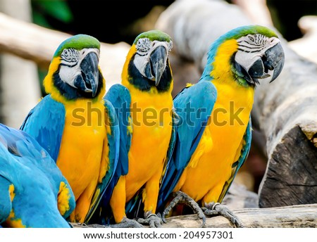 Beautiful of macaw