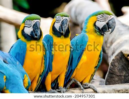 Beautiful of macaw - stock photo