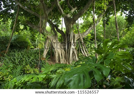 Beautiful old tree in tropical forest