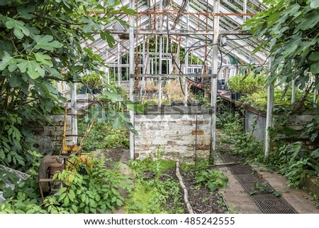 Beautiful old Victorian era greenhouse left to ruin in old English garden