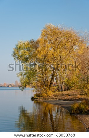 Beautiful orange autumn tree at the river