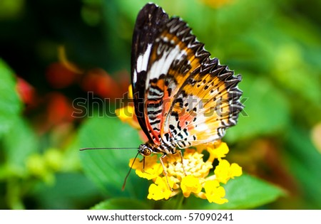Beautiful orange butterfly on a small yellow flower
