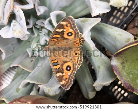 Beautiful orange butterfly on succulent plant