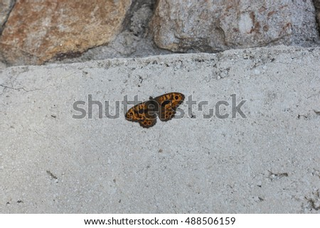 beautiful orange butterfly on the concrete wall