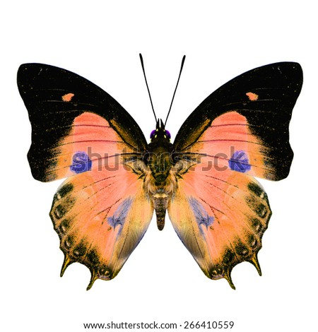 Beautiful orange butterfly with blue spots on wings isolated on white background, soft focus