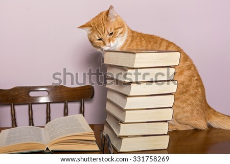 Beautiful orange cat sits at a table, surrounded by piles of books - stock photo