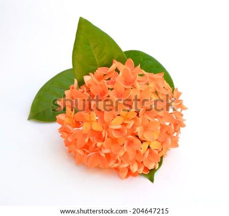 Beautiful orange flower spike isolated on white background - stock photo