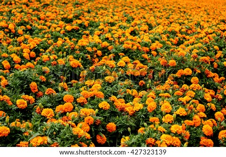 Beautiful orange flowers.