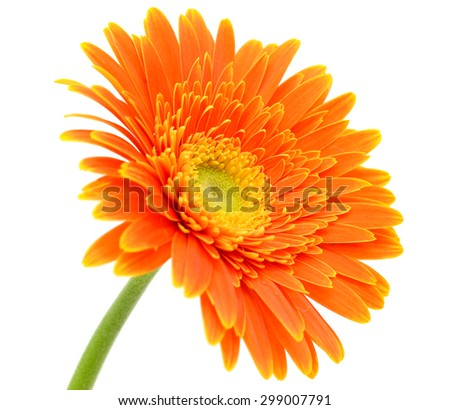 beautiful Orange gerbera flower, isolated on white background - stock photo
