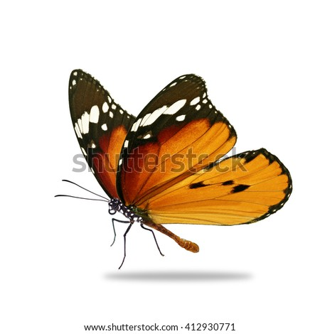 Beautiful orange monarch butterfly isolated on white background - stock photo