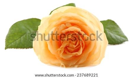 Beautiful orange rose isolated on white - stock photo