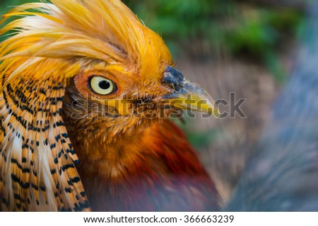 Beautiful orange tropical bird with luxury plumage on the green grass background, bright and clean colors, macro - stock photo