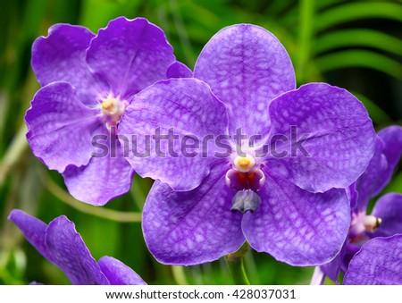 Beautiful orchid - stock photo