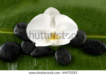 Beautiful orchid and black stones on banana leaf