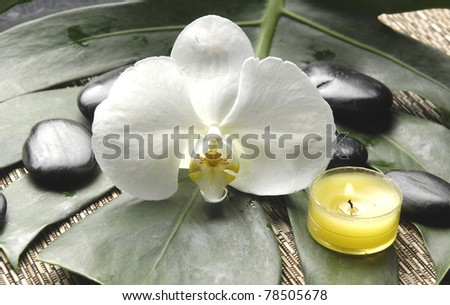 Beautiful orchid and stones with yellow candle on monstera plant
