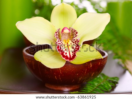 Beautiful orchid close up in cup of coconut closeup - stock photo