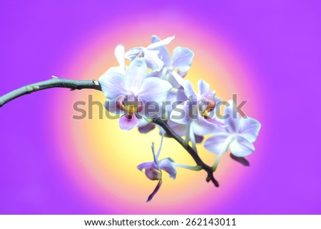 beautiful orchid flower bouquet sun shines brightly - stock photo
