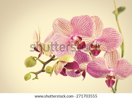 Beautiful orchid flowers on sepia background  - stock photo