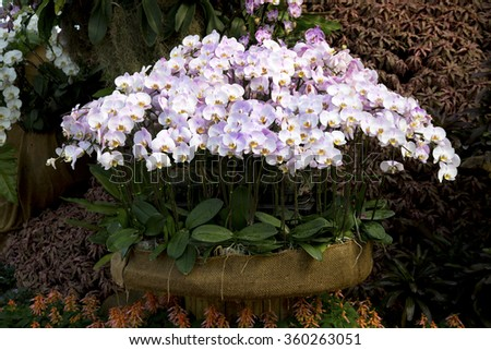 Beautiful  Orchid garden, Orchid design - stock photo