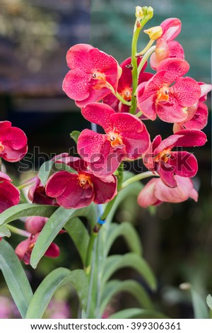 Beautiful orchid garden, outdoor background