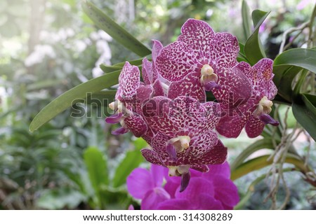 Beautiful orchid in nature - stock photo