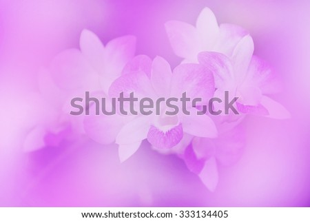 Beautiful orchid in purple color blurred abstract background - stock photo