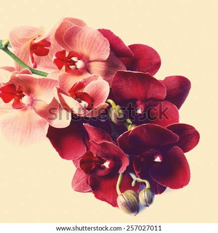 Beautiful orchid on beige background - stock photo