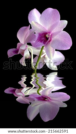 beautiful orchid on black background - stock photo