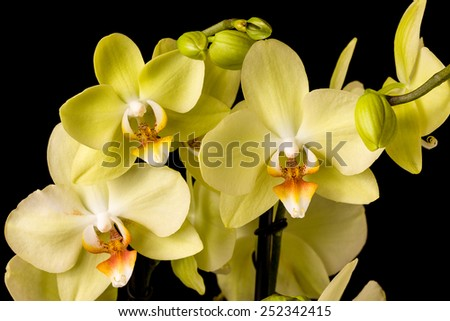 Beautiful orchid on dark background  - stock photo