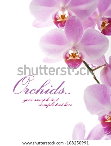 Beautiful orchid on the white with copy space - stock photo