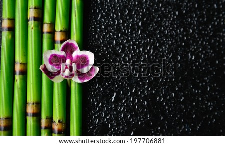 Beautiful orchid on thin bamboo grove and wet black background