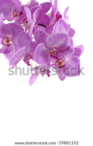 Beautiful orchid on white - stock photo