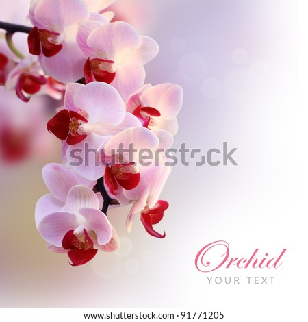Beautiful orchid purple (orchid flower border design) - stock photo