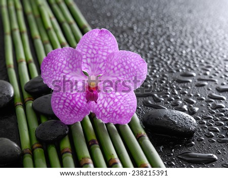 Beautiful orchid with black stones and bamboo grove on wet background - stock photo