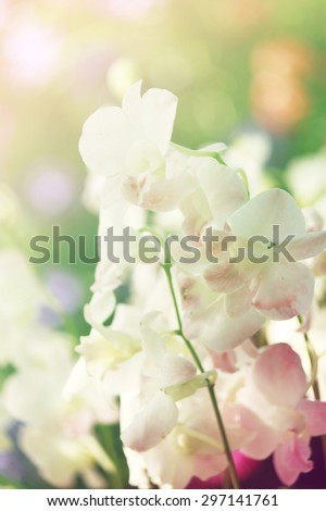 Beautiful orchids with Soft Focus Color Filtered background.