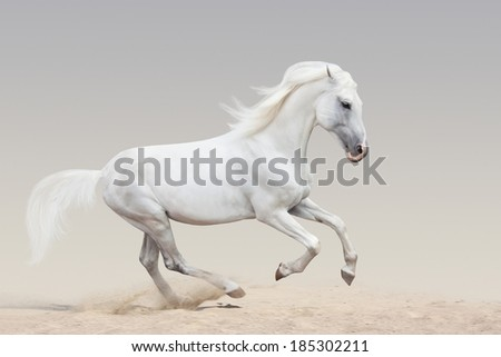 Beautiful Orlov trotter running on sandy soil - stock photo