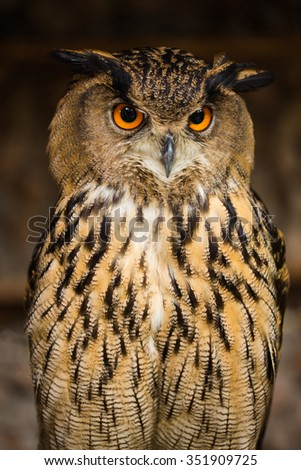 beautiful owl on brown background - stock photo