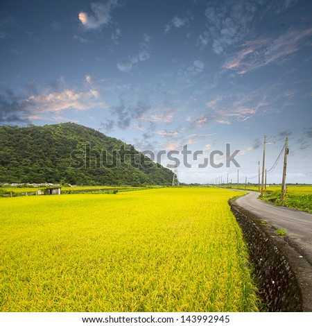 Beautiful paddy for adv or others purpose use - stock photo
