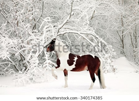 Beautiful paint draft horse in winter snow park - stock photo