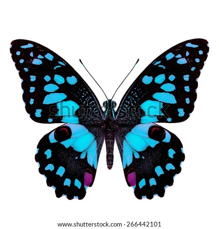 Beautiful pale blue butterfly, Papilio demoleus Linnaeus in fancy color profile isolated on white background, soft focus - stock photo