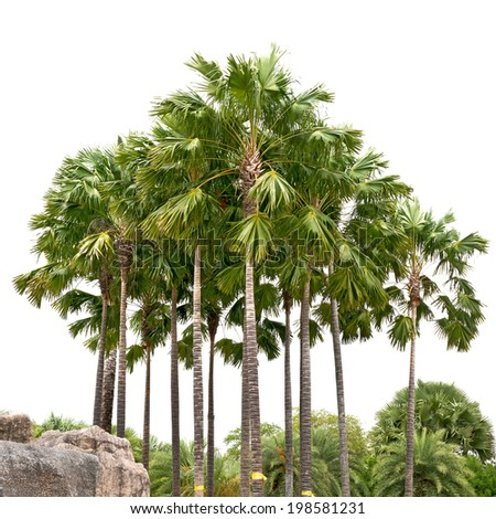 Beautiful palm garden  isolated on white background - stock photo