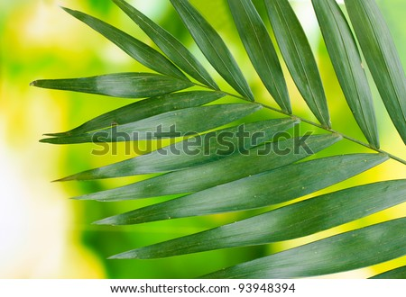 Beautiful palm leaf on green background - stock photo