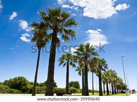 Beautiful palm-lined street under blue sky